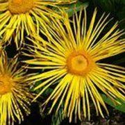 I - Flower Seeds - I