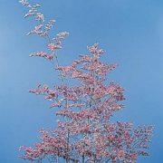 L - Flower Seeds - L