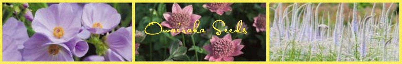 Owairaka Seeds Rare And Hard To Find Perennial Flower Seeds For