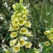 D - Flower Seeds - D