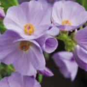 A - Flower seeds - A