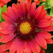 G - Flower Seeds - G